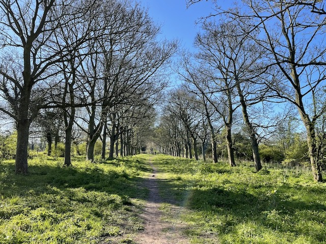 A long dirt path lined with trees and grass