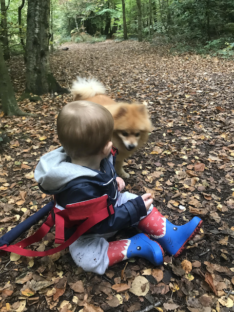 Grandson and Rocco the dog in the woods in Autumn